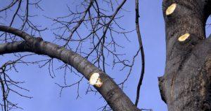 tree trimming surrey