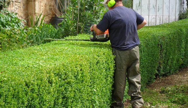 hedge shaping surrey