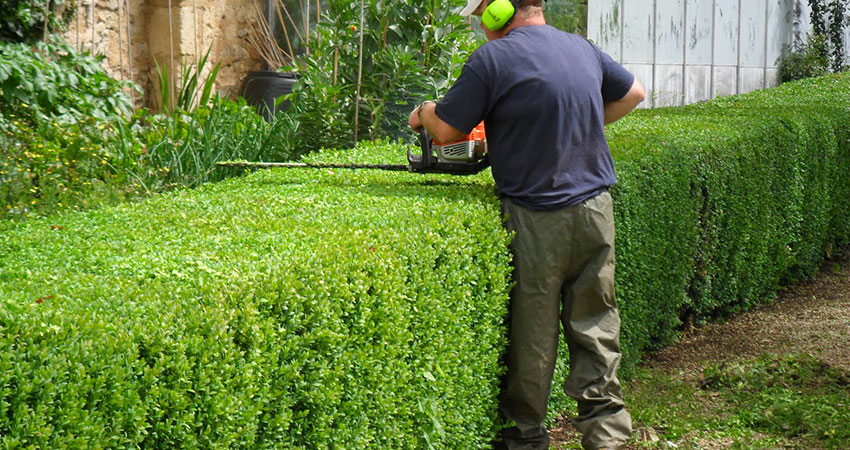 hedge shaping surrey