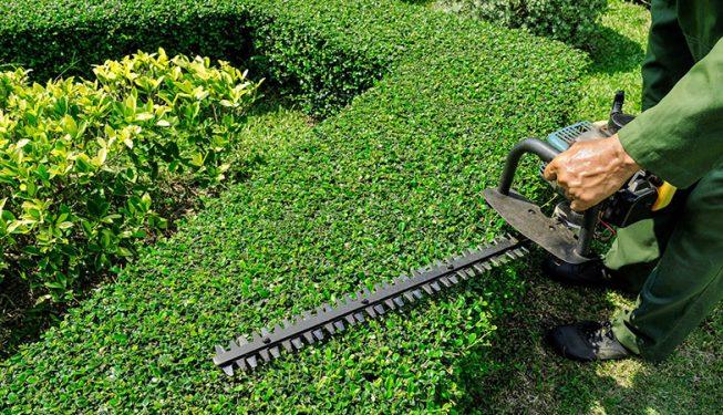 hedge trimming sussex