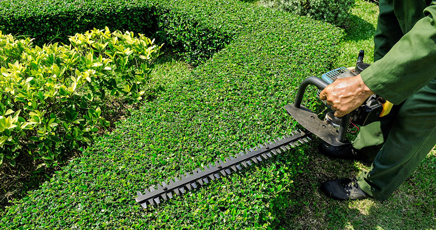 hedge trimming sussex