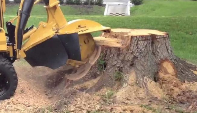stump removal surrey