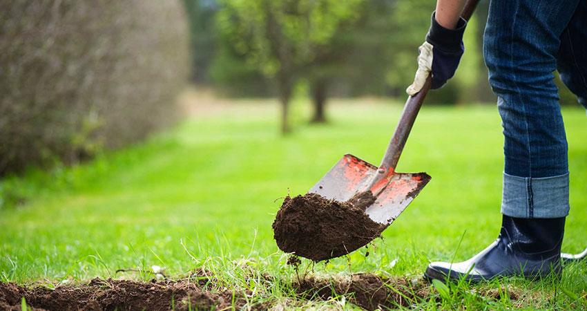 tree planting surrey