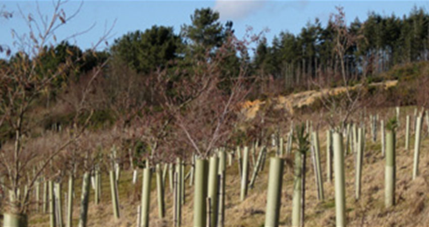 tree planting sussex