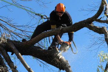 Tree Pruning and Tree Cutting