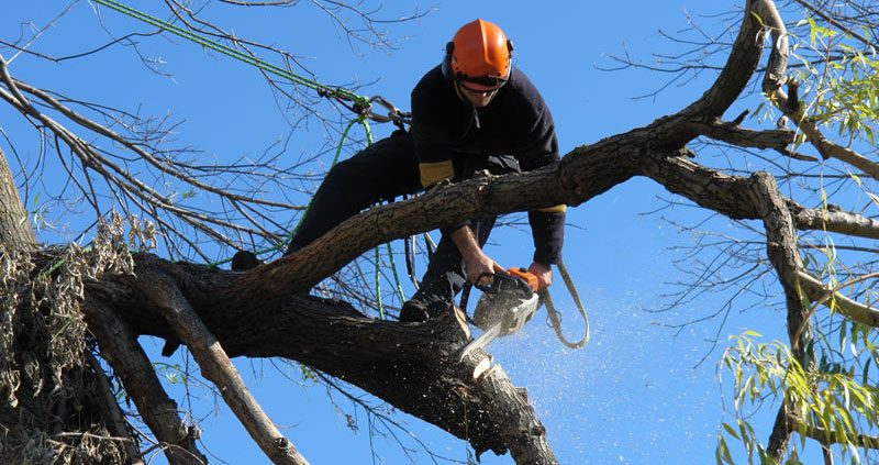 tree pruning sussex