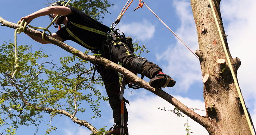 tree surgeon surrey